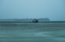 Tree lying in the shallows to the north of G.A. Kanduhuludhoo. PHOTO/AISHATH NAJ
