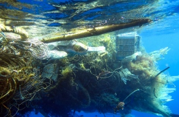 Turtles entrapped in discarded fishing net. PHOTO/OLIVE RIDLEY PROJECT.