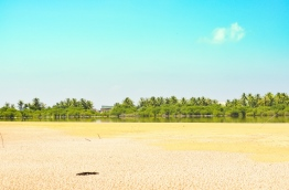 The mangrove swamp of H.Dh. Kulhudhuffushi. PHOTO: AHMED SHAFFAH/MIHAARU