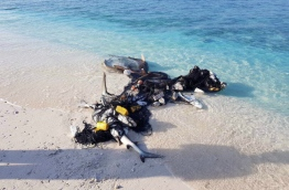 Dead sharks caught in a fishing net in A.A. Ukulhas. PHOTO/ANONYMOUS