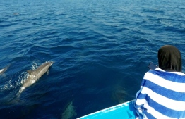A pod of Dolphins surrounded our boat during the snorkeling trip. PHOTO/THE EDITION/HAWWA AMAANY ABDULLA