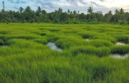One of the nature parks in Fuvahmulah. PHOTO/SIPPE