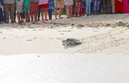 Rehabilitated turtles returning to the call of home. A large crowd had gathered to witness the sight. PHOTO: HAWWA AMAANY ABDULLA/ THE EDITION