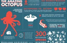 Key facts about the Cephalopo of the day! IMAGE: INFOGRAPHIC / AQUA.ORG
