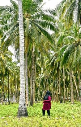 Palm tree groves off the highway of Laamu Link Road encapsulate the stunning beauty of this iconic causeway. PHOTO: HAWWA AMANY ABDULLA / THE EDITION