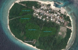 The allocated areas for coconut palm removal at Magoodhoo, Noonu Atoll. PHOTO: MIHAARU