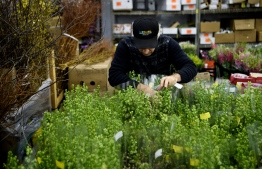 A purchaser sorts though flowers at Potomac Floral Wholesale February 12, 2019 in Silver Spring, Maryland, two days before Valentines day. (Photo by Brendan Smialowski / AFP)