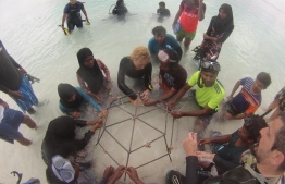 During the workshop held at Ukulhas, Alif Alif Atoll. PHOTO: CORAL DOCTORS