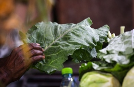 This Ramadan, the popular 'Kopee Fai' (local leaf similar to Kale) is currently sold at MVR 20. PHOTO: MIHAARU