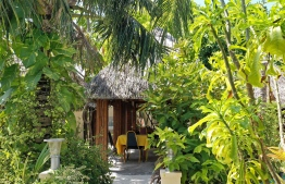 The flora surrounding the outdoor dining area of Kottafaru Guesthouse. PHOTO: HAWWA AMANY ABDULLA/ THE EDITION