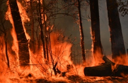 """A bushfire burns outside a property near Taree, 350km north of Sydney on November 12, 2019. - A state of emergency was declared on November 11, 2019 and residents in the Sydney area were warned of """"catastrophic"""" fire danger as Australia prepared for a fresh wave of deadly bushfires that have ravaged the drought-stricken east of the country. (Photo by PETER PARKS / AFP)"""