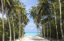 Arguably, sauntering along a coconut grove toward salty zephyr and blue horizons must one of life's greatest pleasures. Certainly, an authentic Maldivian onePHOTO: HAWWA AMAANY ABDULLA / EDITION